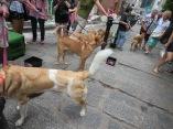 Doggie adoption event!