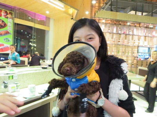 It's got socks, a coat, and a cone! This dog has too much style.