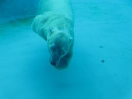 Swimming beast